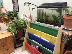 classroom pets 4