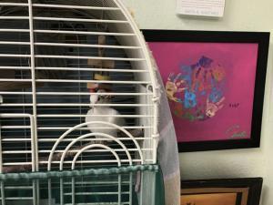 classroom pets 3